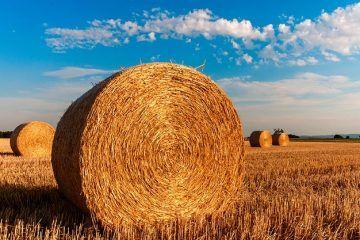 investire sui beni agricoli